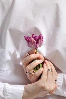 Female hands with rings holds purple tulip on gray background