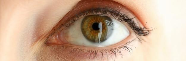 Самка левого оранжево-зеленого цвета удивительного глаза
