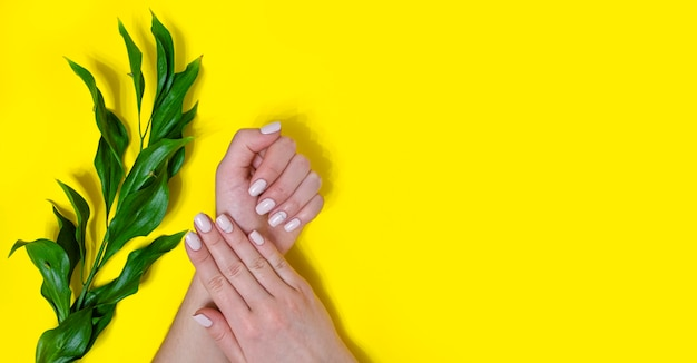 Female manicure on a bright background. yellow background. place for an inscription. banner.
