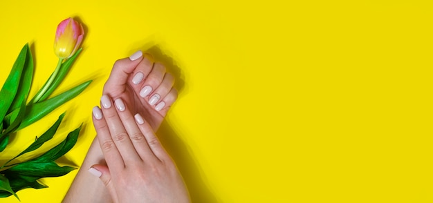 Female manicure on a bright background. yellow background with tulips. place for an inscription. banner.