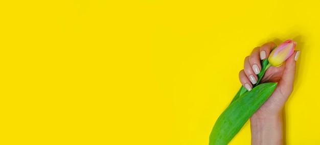 明るい背景の女性のマニキュア。チューリップと黄色の背景。碑文の場所。バナー。