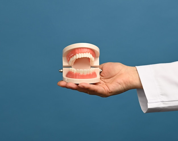Female medic in a white coat holds a plastic model of a human jaw on a blue background