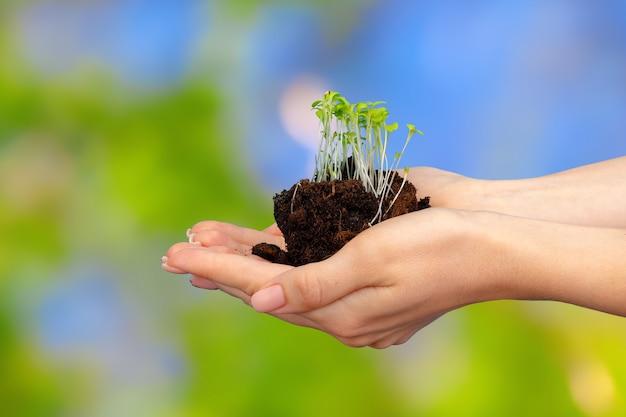 젊은 식물 콩나물과 토양을 들고 여성 팜