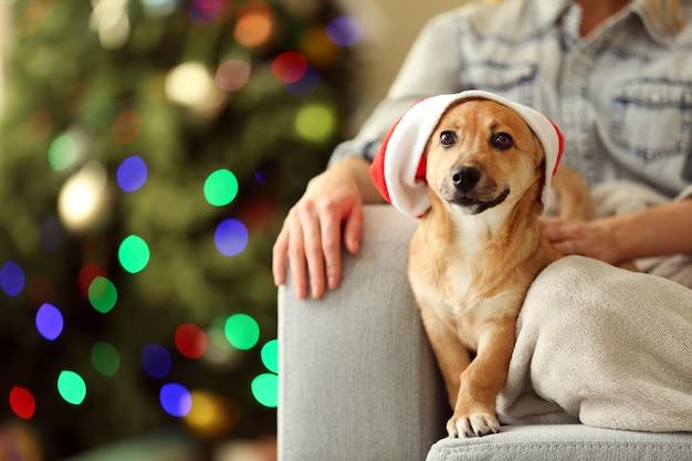 크리스마스 트리의 의자에 작고 귀여운 개를 안고 있는 여성