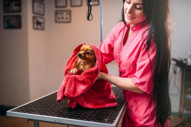 女性のペットグルーマーが小さな犬をタオルで拭き、子犬をグルーミングサロンで洗います。家畜のためのプロの新郎と髪型