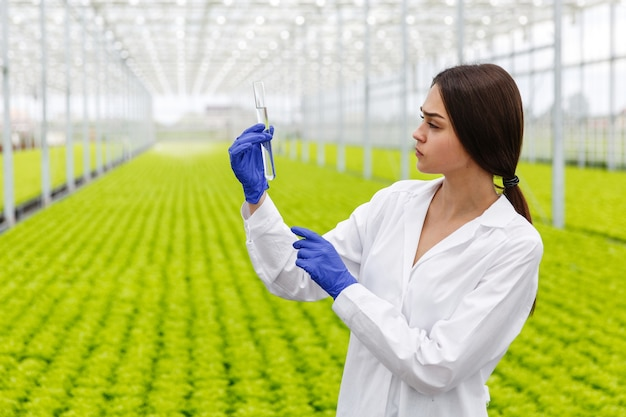 Female researcher holds a glass tube with a sample standing before plants in the greenhouse