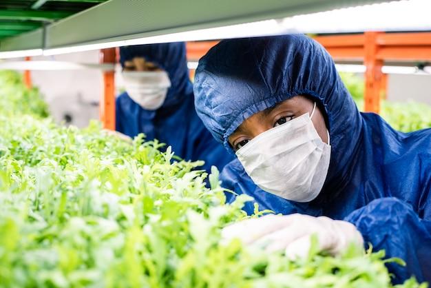 新しい種類の園芸植物の緑の苗と棚のそばに立っている保護作業服の女性研究者