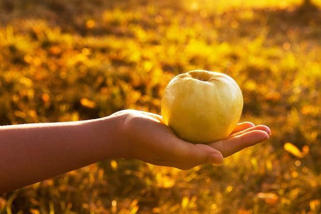 Female's hand holding green apple in a garden on sunset