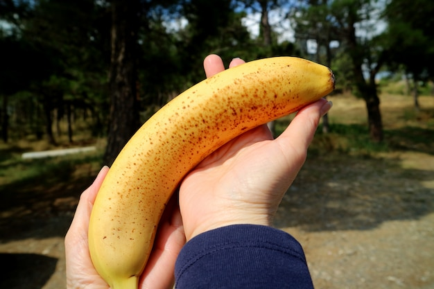 Female's hands holding a ripe banana with brown spots on its skin