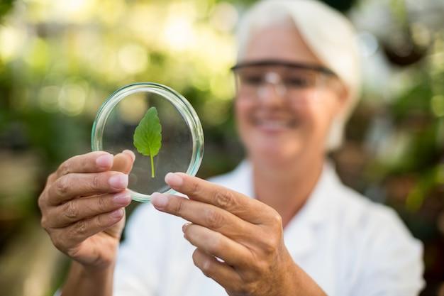 Женщина-ученый рассматривает лист на чашке петри