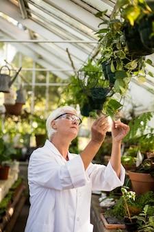 Женский ученый, изучения листьев растений