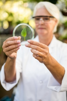 Женщина-ученый держит лист на чашке петри