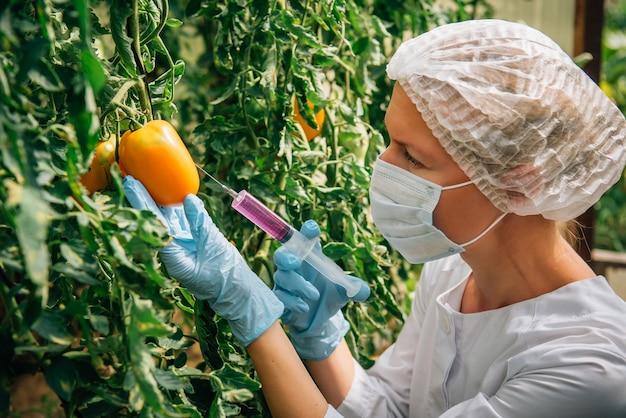 マスクと手袋をはめた女性科学者が、温室の枝からぶら下がっているトマトに化学物質を注入し、クローズアップします。遺伝子組み換え野菜のコンセプト。 gmoと農薬の変更。
