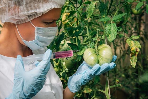マスクと手袋をはめた女性科学者が温室内のトマトに化学物質を注入する