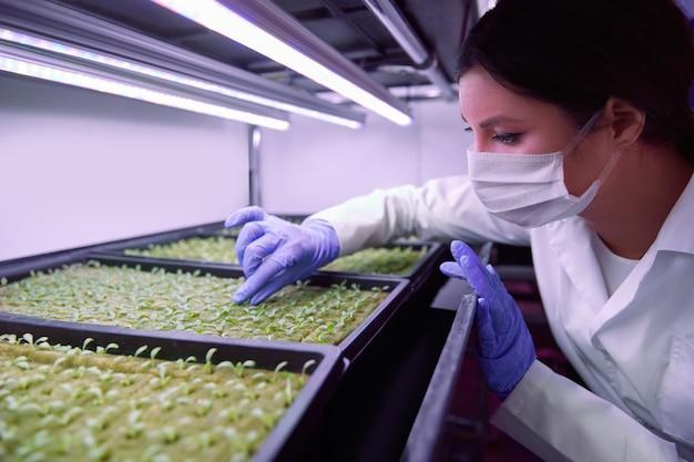 농업 농장 실험실에서 uv 램프 아래에서 자라는 작은 녹색 새싹을 검사하는 보호 마스크와 장갑을 끼고 있는 여성 과학자