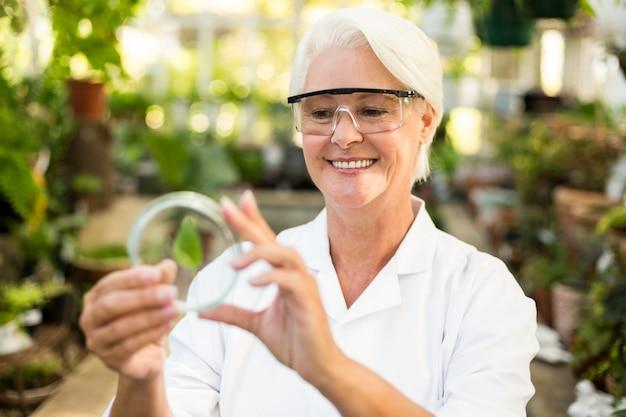 Женский ученый, улыбаясь при рассмотрении листьев на чашке петри