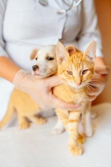 Женский ветеринарный врач держит симпатичного имбирного щенка и котенка