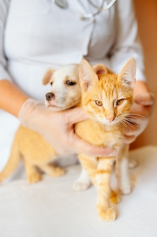Female vet doctor holding cute ginger puppy and kitten