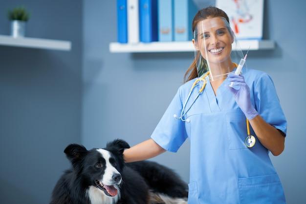 クリニックで犬を調べる女性獣医