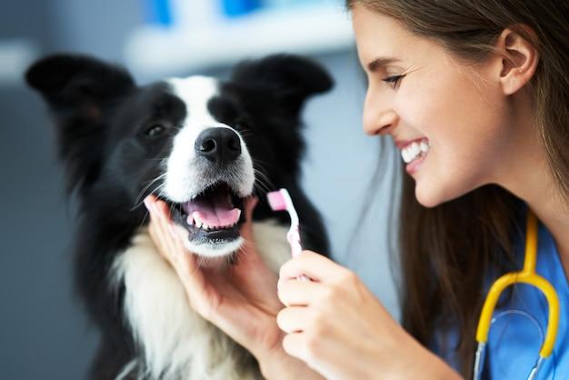 클리닉에서 개를 검사하는 여성 수의사
