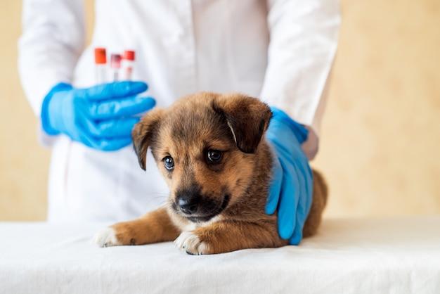 병원에서 귀여운 강아지를 들고 여성 수의사.