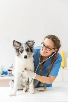 Female veterinarian examining the dog with stethoscope on table in clinic