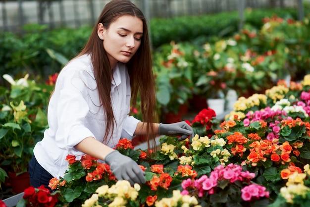 温室で花の世話をしている女性労働者。