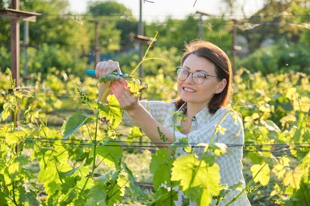 Женщина работает с виноградными кустами, весной, летом обрезка виноградника