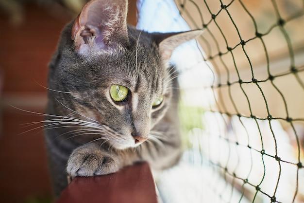 Самка молодая кошка лежит на перилах балкона, наблюдая на открытом воздухе