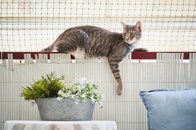 Самка молодая кошка, лежа на перилах балкона