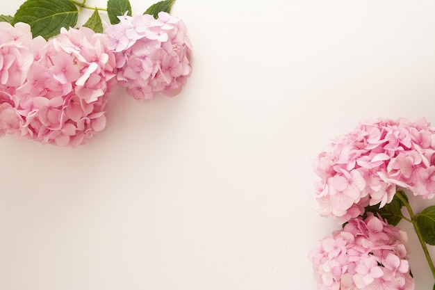 Feminine background,  pink hydrangea flowers with copy space