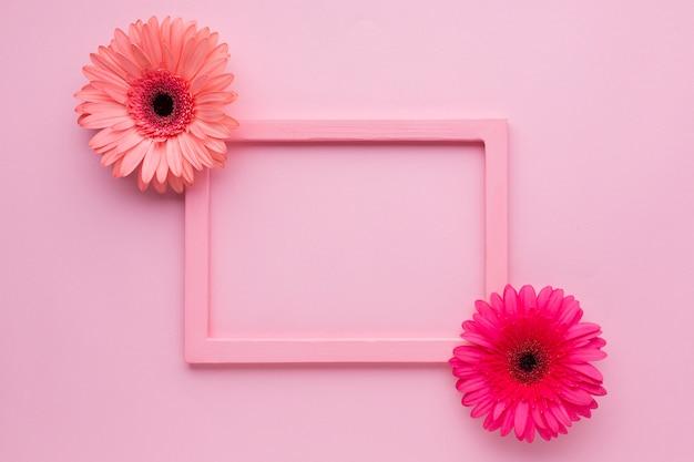 ガーベラヒナギクとフェミニンなピンクの背景