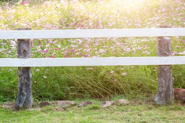 Fence in cosmos garden