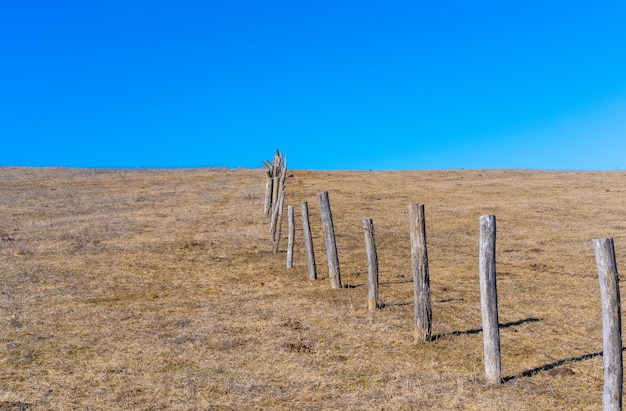 Fence in the field from wooden trunks.