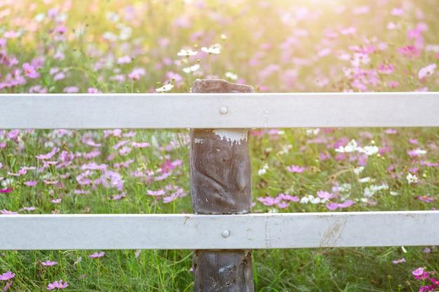 コスモスの柵
