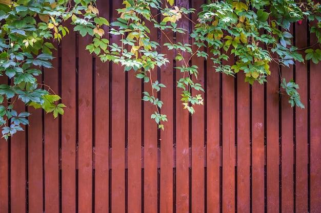 Забор из красных тонких досок, сверху ветка с зелеными листьями