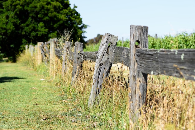 A fence outside the orchard