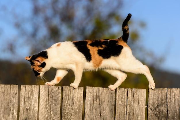 村の木のfenceの上を歩く猫