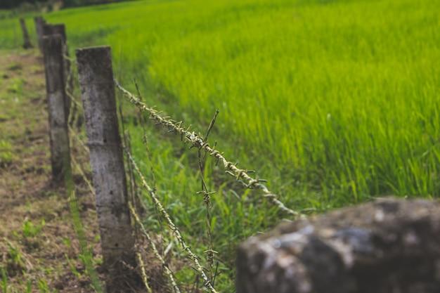 Огороженное поле с зеленой травой