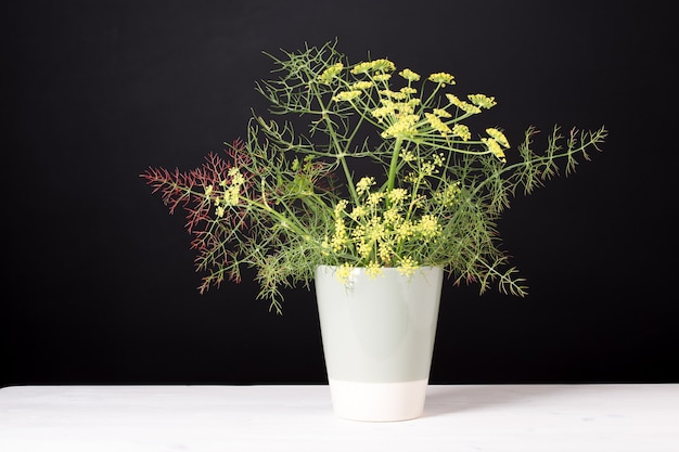 花瓶のフェンネル。装飾または料理用の芳香性ハーブ