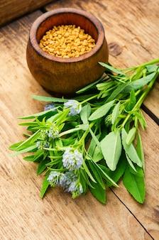 나무 테이블에 신선한 식물을 넣은 호로파 씨앗