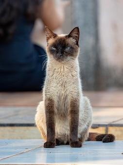 Дикая домашняя кошка, брошенная на кладбище с выборочным фокусом