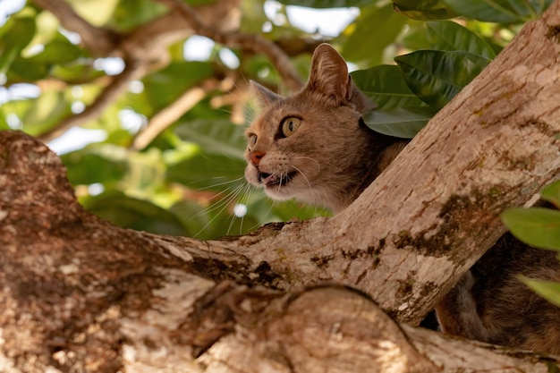 Feral domestic cat on top of a tree with selective focus
