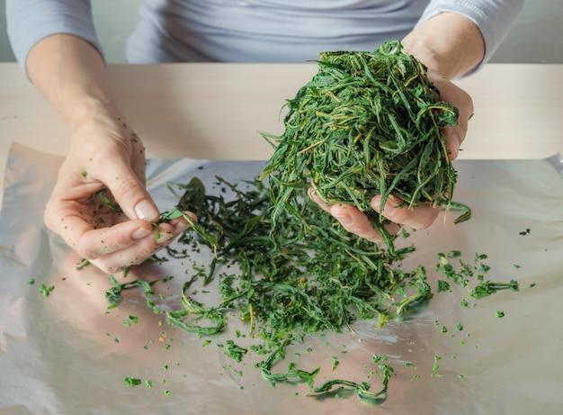 茶葉の発酵プロセス。マニュアル制作koporye tea-イワン茶。