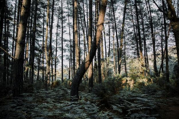 晴れた日の森林で生えているシダと木々