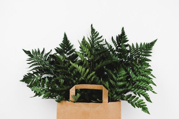 Fern branches in brown shopping paper bag on white