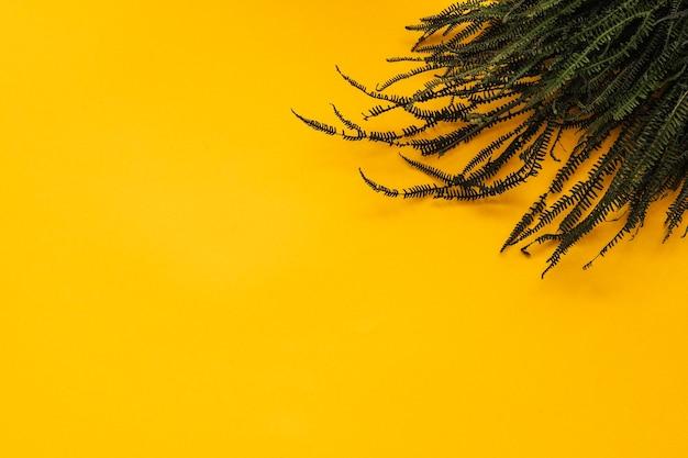 黄色の背景にシダの枝