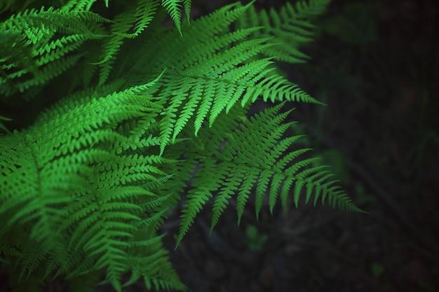 森の中で育つシダの茂み、美しい葉のパターン。
