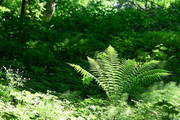 열대 정글 배경의 고사리 식물 패턴 천연 식물 열대 배경이 있는 고사리 잎...