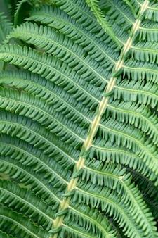 열 대 정글 배경에서 고사리입니다. 고사리는 식물 패턴으로 나뭇잎. 천연 식물 열 대 배경입니다. 고품질 사진